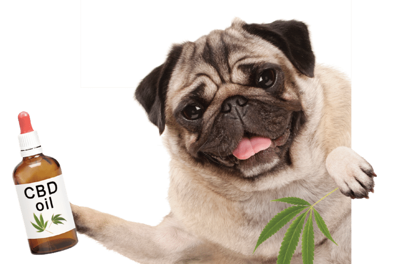 CBD For Your Dog