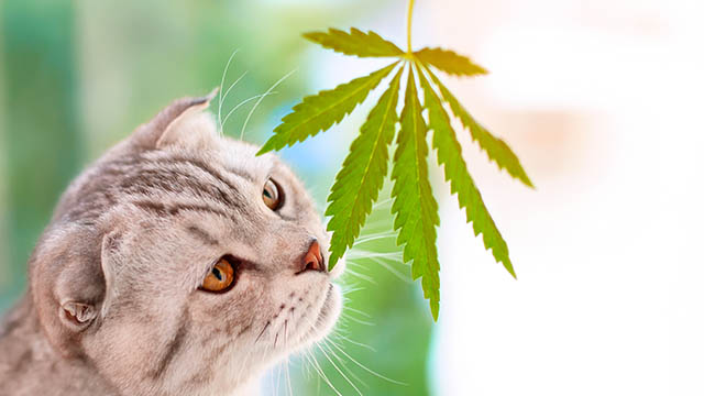 Benefit of CBD for your pets